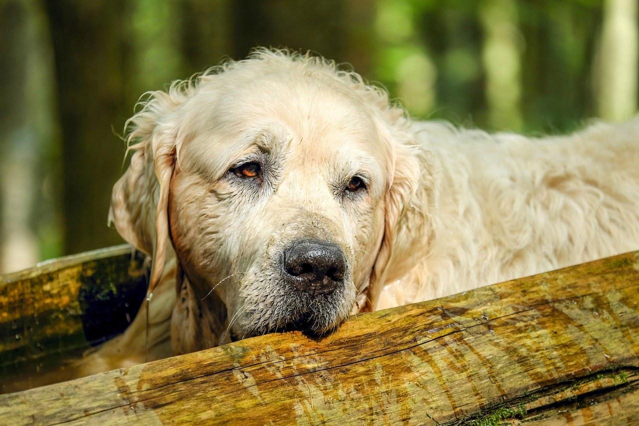 Pälsvård för hund
